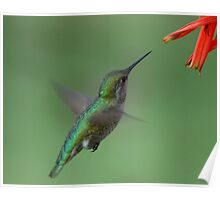For me New Year means....a lot of hummingbirds Poster