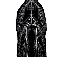 Human Nervous System by RocoesWetsuit