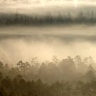 18.9.2014: Forests in Fog by Petri Volanen