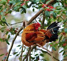 Rooster In A Tree by Cynthia48