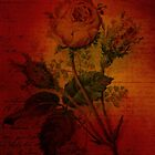 Red Rose by Sarah Vernon