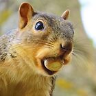 That's A Mouthful!!  by lorilee
