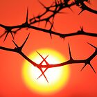 Red Thorn - Simply Majestic Nature  by LivingWild