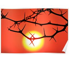 Red Thorn - Simply Majestic Nature  Poster