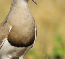 Plover Talk - Funny Nature and Entertaining Wildlife Sticker