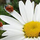 3 Little Ladybirds by ElsT