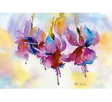 Fuchsia Watercolor II Photographic Print