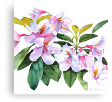 Spring Rhody Watercolor Canvas Print