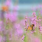 Butterfly field by Jeannine St-Amour