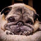 Pug Eyes by boodapug
