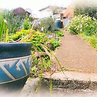 Up the Garden Path by Clare Colins
