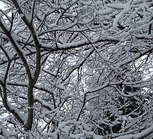 Snowy Branches in Wonderland by mystereoheart