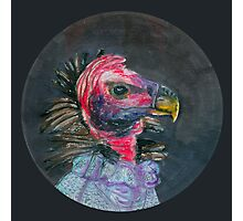 madam turkey vulture Photographic Print