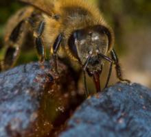 Bee 12 Sticker
