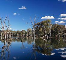 Wonga Wetlands  by D-GaP