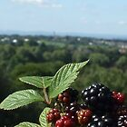 bramble view by Babz Runcie