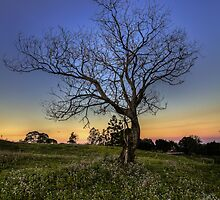 Lone Tree by Steve Bass