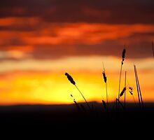 Dairy Park Farm Sunset by Rod Kashubin