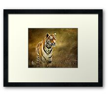 Tiger in the grass Framed Print