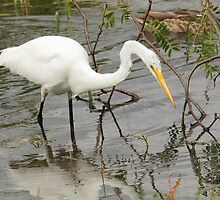 Egrets, I've had a few... by Todd Weeks