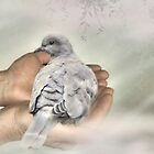 The Mourning Dove by littlecritters