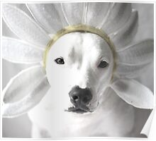 Pittie Flower Poster