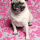 The Laughing Pug by NJMphotography