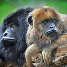 Howler Monkeys by venny