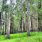Quaking Aspens by Vickie Emms