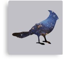 stellar's jay Canvas Print