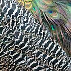 Peacock Feathers by Cynthia48