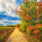Step back into fall by Owed to Nature