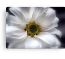 Tears On My Pillow.............Gerbera Canvas Print