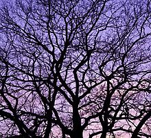 Tree silhouette at sunset. by bashta