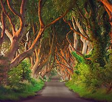 Dark Hedges  Co Antrim  Northern Ireland Panorama by Zdrojewski