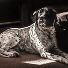 Auggie in the Sunlight  by Theodore Black