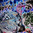 Wild Turkey by Rick Gold