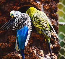 Parakeets by PatiDesigns