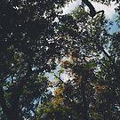 Tree x Sky by tropicalsamuelv