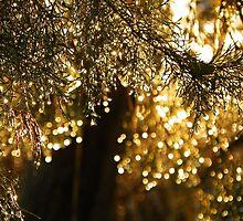 Christmas lights  by Robin Simmons