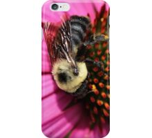 Bumble Bee and Cone Flower iPhone Case/Skin