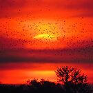 Dawn of the Birds by lorilee