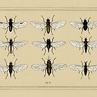 Entomology studies fig. 10 by djrbennett