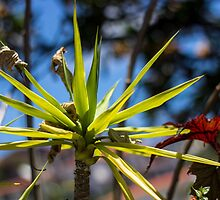 Spike Plant - Nature Photography  by JuliaRokicka