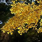 Golden ginkgo by Celeste Mookherjee