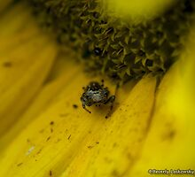 Living in a Sunflower by BLaskowsky