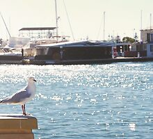 Standing Seagull by MelissaSue
