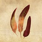 Fall Feathers  by Terry  Fan