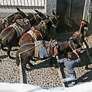 the donkeys of Santorini by geof