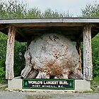 Worlds Largest Burl by AnnDixon